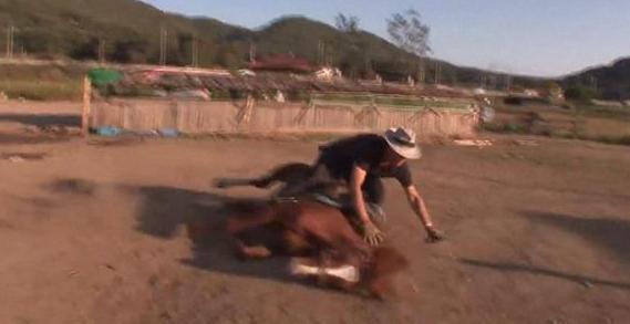 小马被骑就倒地装死