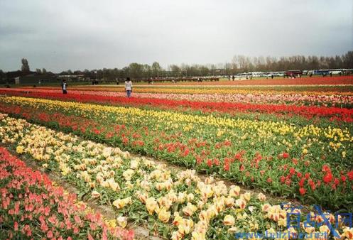 荷兰停止推广旅游