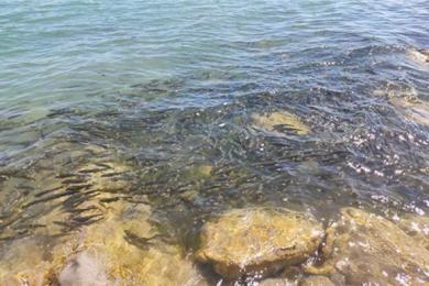 茶卡盐湖诱导游客吃湟鱼,吃了这种鱼会有什么后果?