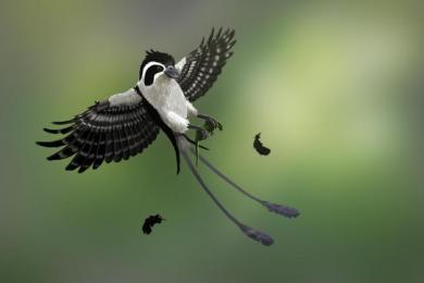 上亿年前的凶猛古鸟类被发现:小小提醒既凶猛又可爱