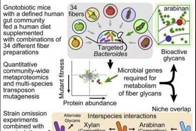 人为什么会挑食?原来肠道微生物才是真正的吃货