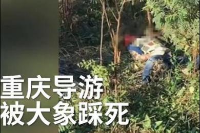 两名游客不听劝告激怒大象 重庆领队为救游客被大象踩死