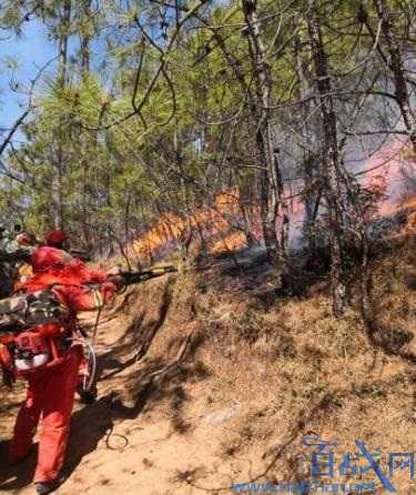 抽烟引发森林火灾,抽烟森林火灾,引发森林火灾