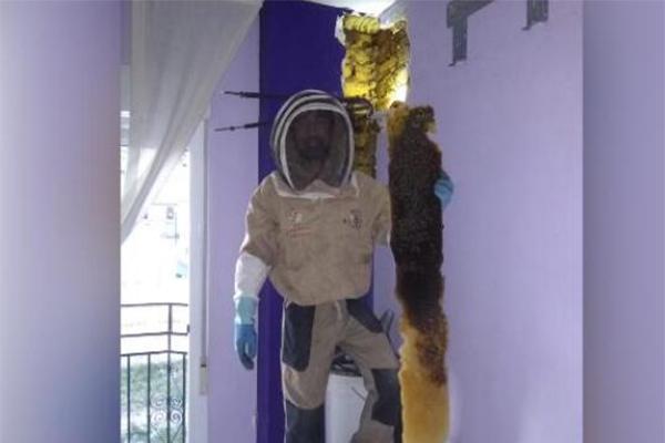 夫妇家中藏巨大蜂巢是什么情况?他们的家为何条件如此完美?