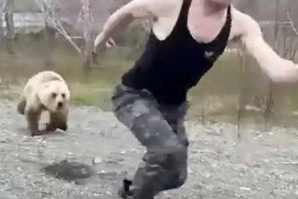 游客跳下车逗弄棕熊,游客逗弄棕熊