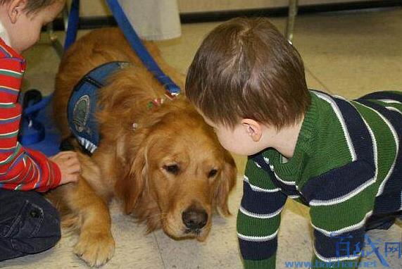 美国法庭引入安慰犬是怎么回事?狗狗缓解受害人情绪立大功