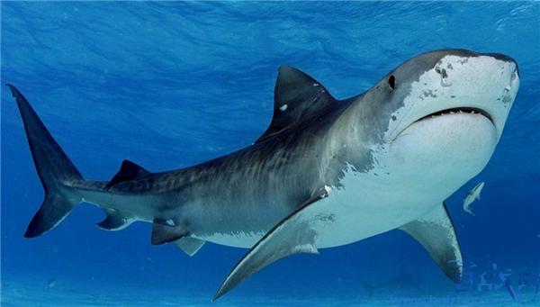 男子5拳击退鲨鱼,5拳击退鲨鱼,美国男子5拳击退鲨鱼