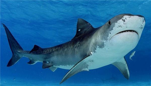 美國男子5拳擊退鯊魚,為救女兒爆發父愛力量