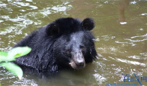 托人买熊掌被首诉,买熊掌被首诉,买熊掌获罪