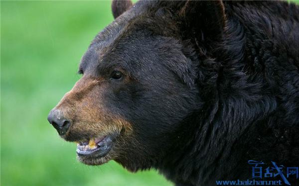 博士进山被熊袭击,博士被熊袭击,被熊袭击