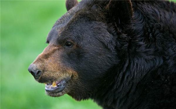 博士进山被熊袭击,失联两天后成功获救