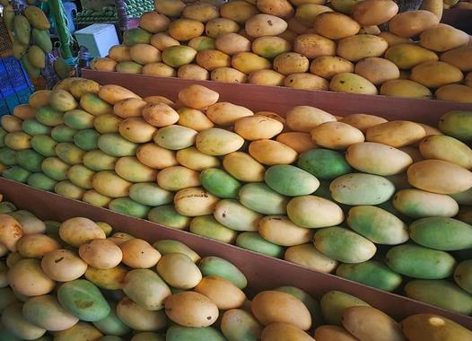 菲律宾200万公斤芒果滞销,农业部长向中国求助
