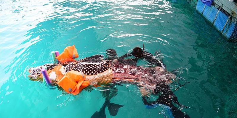 三亞領航鯨擱淺搶救無效死亡,領航鯨的遺體已保存