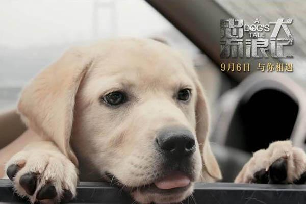 《忠犬流浪记》什么时候开播?忠犬流浪记国内定档9月6日上映