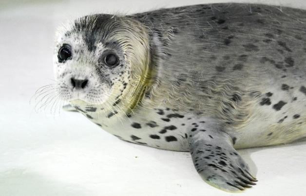 走进南极冰间湖之谜,小海豹为科学家揭秘真相
