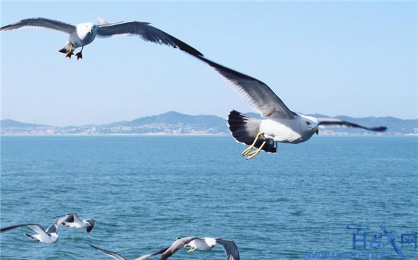海鸥携带超级细菌
