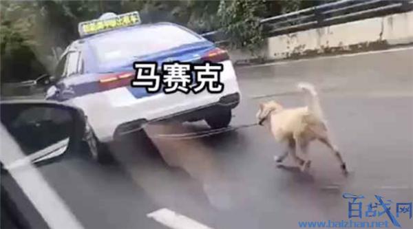 的哥开出租车遛狗,开出租车遛狗,出租车遛狗