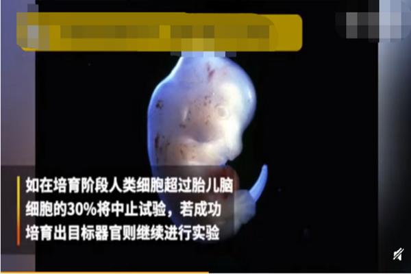 这是要干嘛?人兽杂交胚胎实验获批 日本还有什么干不出来?