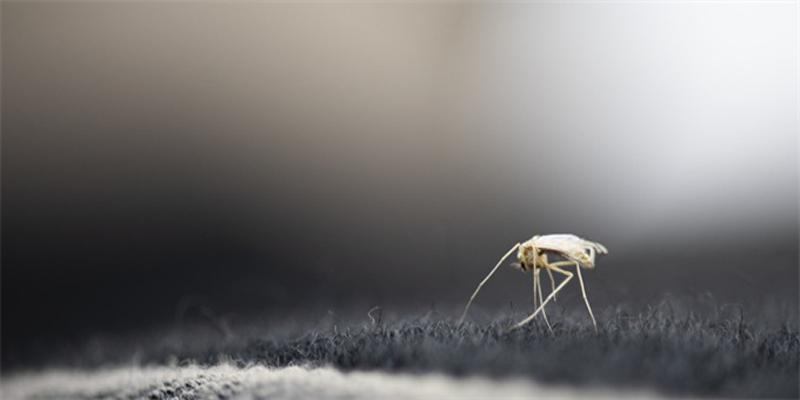 人类为蚊子献血是认真的吗?法国动物权利人士提议人类为蚊子献血!