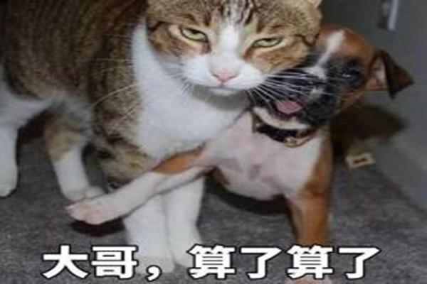 东风快递声援香港:我支持香港警察,你们可以打我了 网友:别激动,消消气