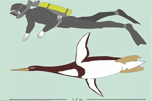 新西兰发现人类大小巨型企鹅化石 体长约1.6米体重可达80公斤