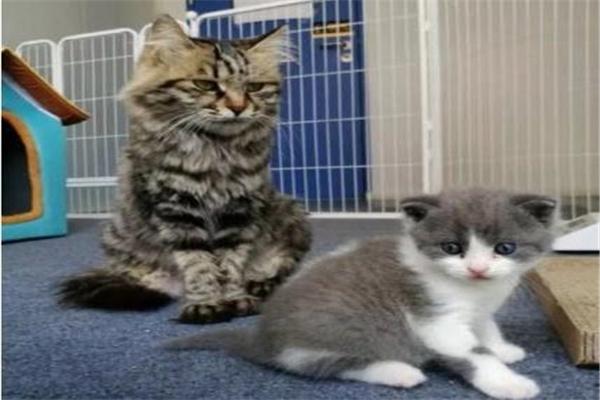 克隆,克隆猫,我国首只克隆猫,我国首只克隆猫满月,克隆猫大蒜