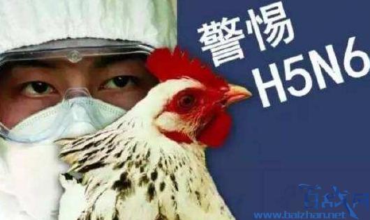 ?#26412;?#30830;诊一例H5N6禽流感病例,患者接触的禽类来自外省