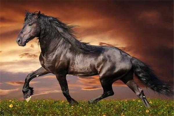 三国,三国时期,十大名马,三国时期的十大名马,三国十大名马