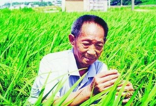 袁隆平青蒿素教材,袁隆平,青蒿素