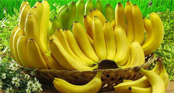 2050年香蕉或完全消失,又一位全球气候变暖受害者