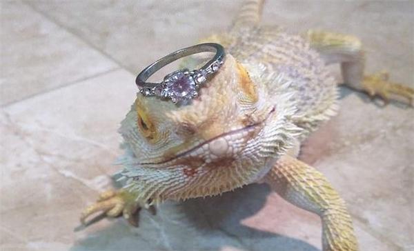 女子给蜥蜴戴钻戒炫富,却意外让蜥蜴成网红