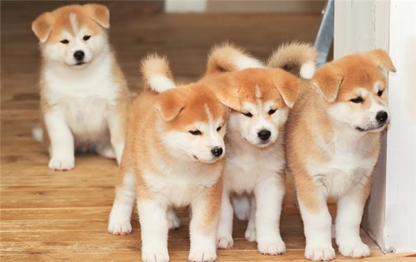 英国房东开始征收宠物房租,每只宠物收取约350元每月