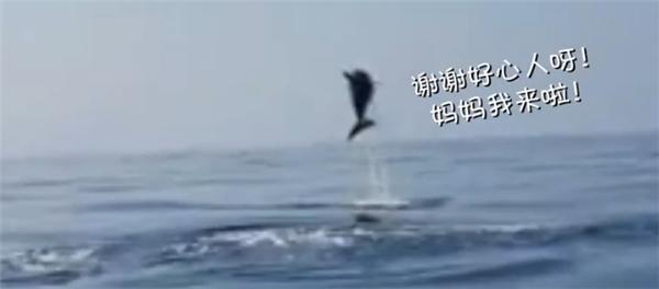 海豚跃出水面道谢,海豚妈妈跃出水面道谢,海豚道谢