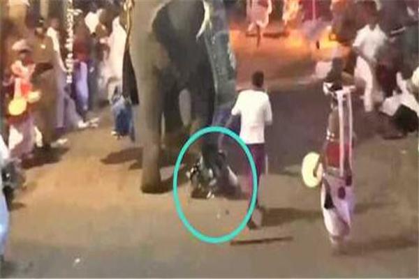 斯里兰卡,大象,大象失控冲向人群,斯里兰卡大象失控伤人,斯里兰卡大象失控冲向人群