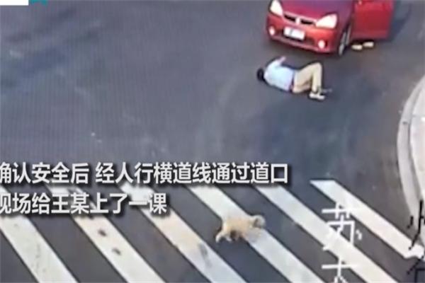 活得不如狗!男子过马路不走斑马线被车撞 旁边小狗走斑马线过马路