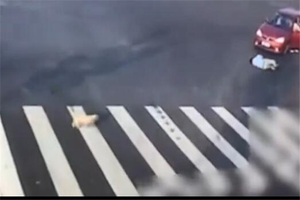不走斑马线被车撞,过马路不走斑马线被车撞,小狗走斑马线过马路,斑马线