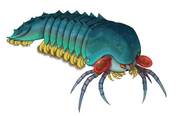 节肢动物鼻祖,古生物学家发现节肢动物鼻祖,蜘蛛蝎子鼻祖