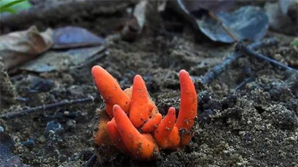 科学家发现最致命真菌,皮肤接触即可引发脑死亡
