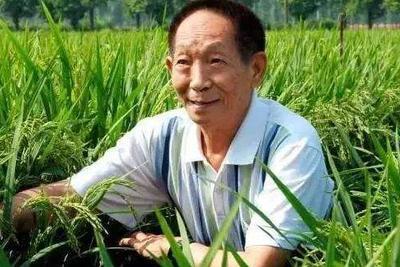 袁隆平团队成立国家耐盐碱水稻技术创新中心 全面开展育种工作