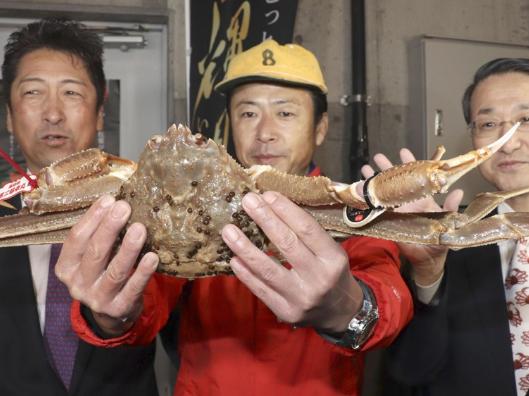 日本一螃蟹500万,日本螃蟹拍出500万,螃蟹拍出500万