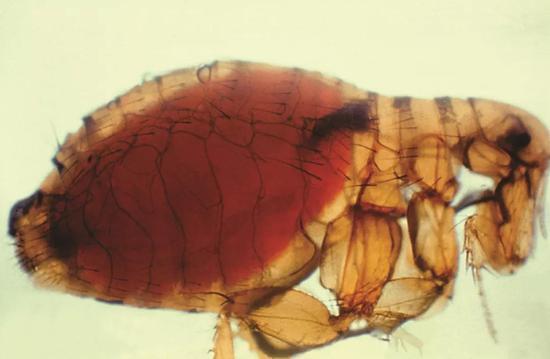 世界上有哪些瘟疫?史上最可怕的瘟疫是什么?