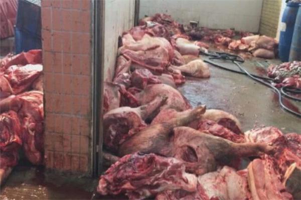 肉联厂洗白病死猪是怎么回事 肉联厂洗白病死猪是什么情况