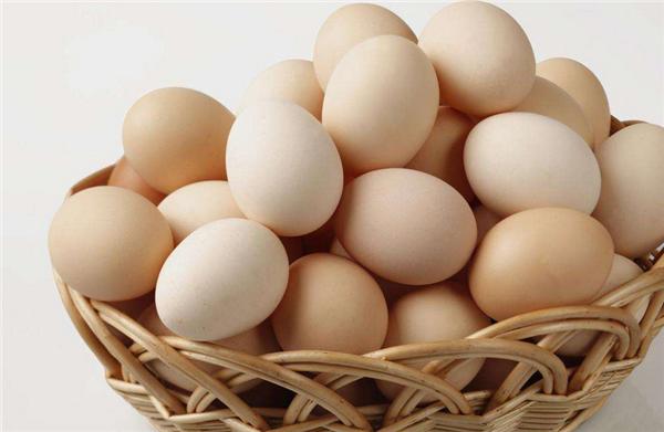 英国小学生缺乏常识,超3成人认为奶牛会下鸡蛋