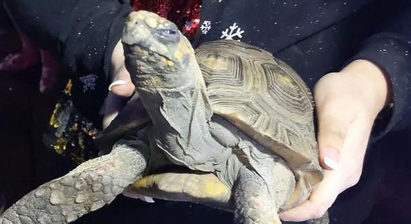 45岁乌龟引火烧屋,被消防员救出后还一脸不爽