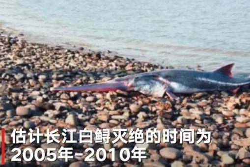 专家称长江白鲟已灭绝 下一个灭绝的物种会是什么?