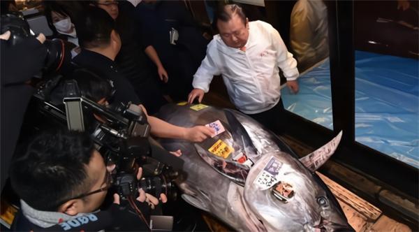 鱼王拍近2亿日元,日本鱼王拍出2亿日元,鱼王拍出2亿日元