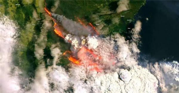 持续山火让澳大利亚化作焦土,超5亿动物葬身火海