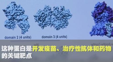 根据中方提供的新冠病毒基因组序列,美方找到疫苗开发关键靶点