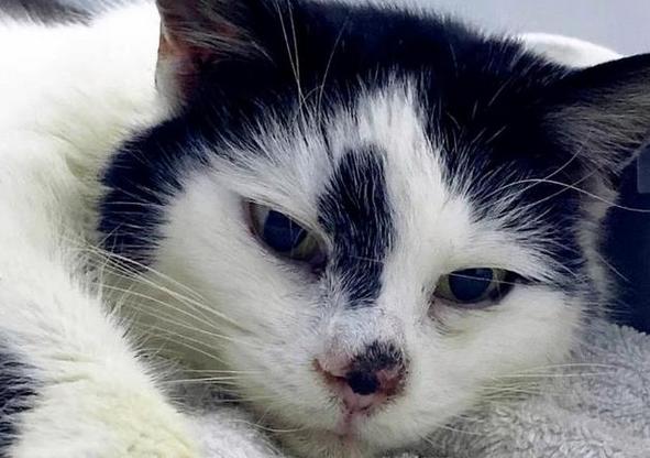 英国猫失踪11年后被找到,与主人奇迹般的团聚