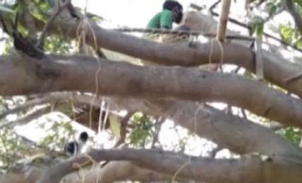 封城21天致无家可归,印度村民住树上自我隔离